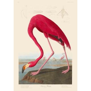 John James Audubon Print, American Flamingo For Sale