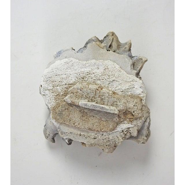Cottage Antique Plaster Fragment For Sale - Image 3 of 7