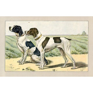 English Pointers, 1907 Lithograph For Sale