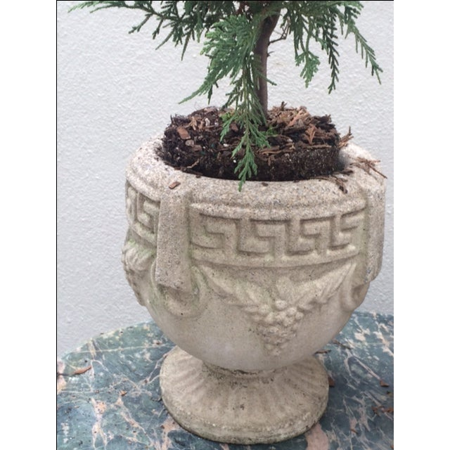 1940s Grecian Cement Planters - A Pair - Image 7 of 7