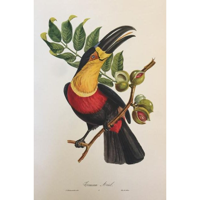 RARE 1st Edition Full Color Lithographic Prints Pageantry of American Birds: Tropical American Birds Jean-Theodore...