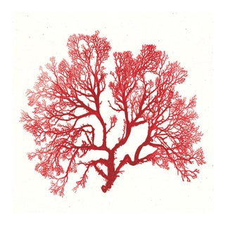 Bradbury Seaweeds 06, Unframed Artwork For Sale