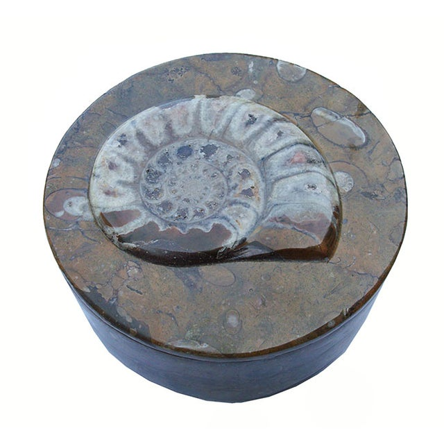 Ammonite and Orthocerus Carved Box - Image 5 of 5