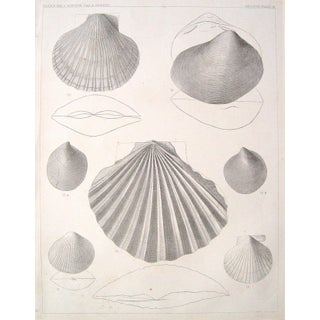 1850 Shell Pacific Expedition Lithograph