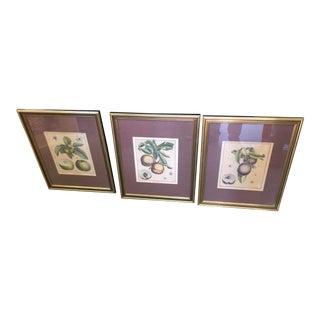 Antique Botanical Prints - Set of 3 For Sale