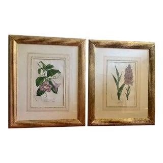 Original Botanical Framed Prints - Set of 2 For Sale