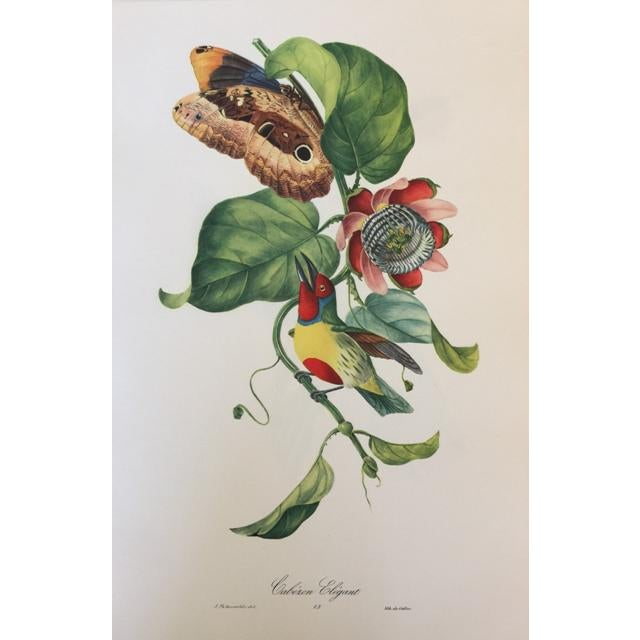 Blue 1st Edition Full Color Lithographs of Tropical American Birds - Set of 30 For Sale - Image 8 of 13