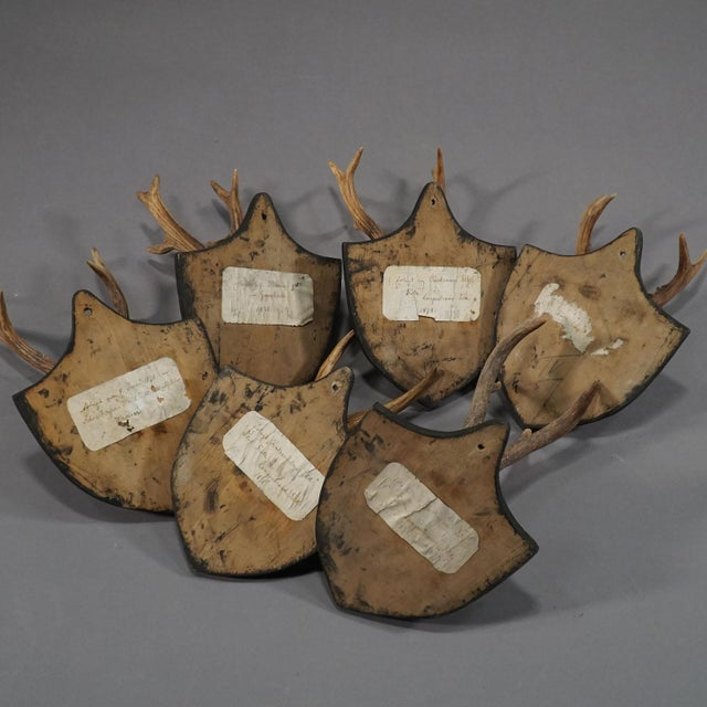 Six Large Antique Deer Trophies on Wooden Carved Plaques Ca. 1870 For Sale - Image 6 of 8