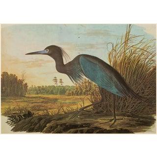Blue Heron by John J. Audubon, XL Vintage Cottage Print For Sale