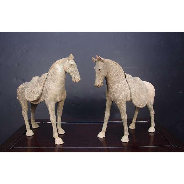 A powerfully molded pair of early Tang Dynasty (618 - 906 AD) walking horses with removable saddles. This fine pair of...