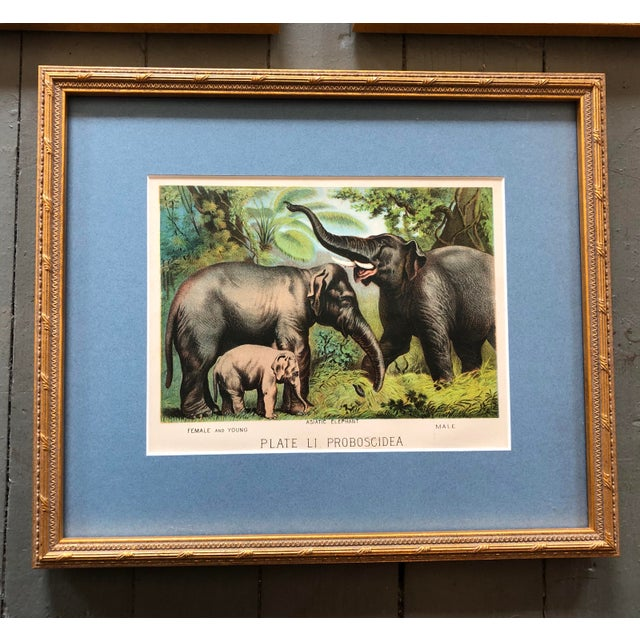 Gallery Wall Collection 3 Antique Framed Set of Chromolithographs Prints Jungle Themed (Cats & Elephants) For Sale - Image 4 of 6
