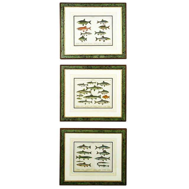 Colorful Trio 1880 Schubert German Lithographs of Aquatic Life For Sale