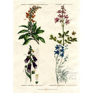 Foxglove and Larkspur, 1820 Botanical Print For Sale