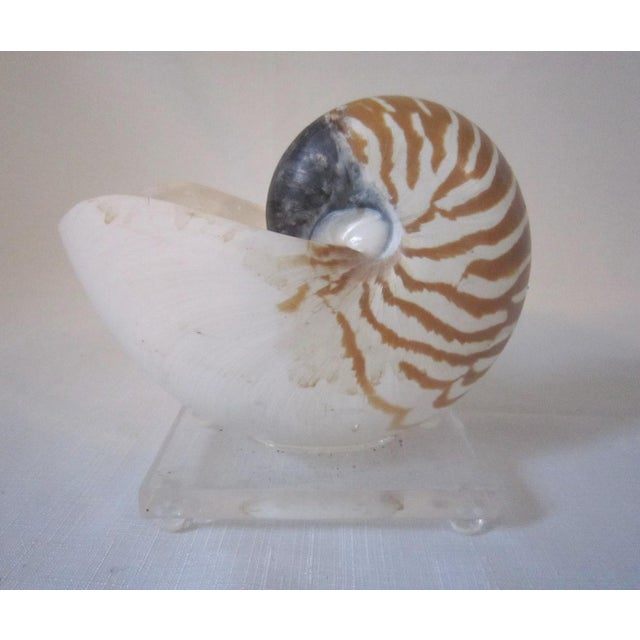 Nautilus Shell Mounted on Lucite Stand For Sale - Image 4 of 7