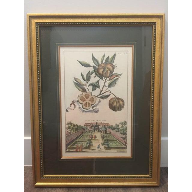 Cottage Antique Botanical / Garden Framed Prints by J. Pocker & Son - Set of 2 For Sale - Image 3 of 5