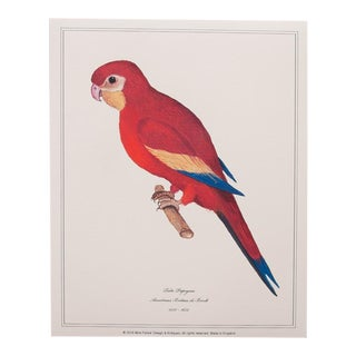 Anselmus De Boodt Red Parrot Reproduction Print For Sale