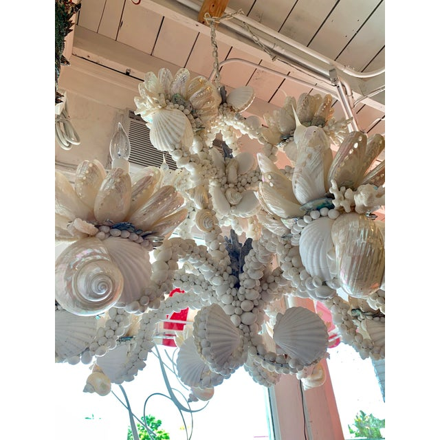 Large 8-Light Shell Chandelier For Sale In West Palm - Image 6 of 9
