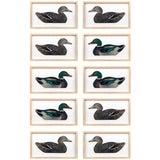 Image of Framed Duck Decoys - Set of 10 For Sale