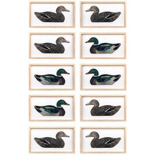 Framed Duck Decoys - Set of 10 For Sale