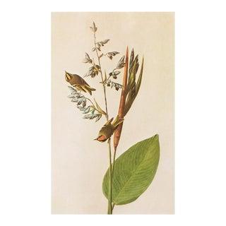 American Golden-Crested Wren and Golden-Crowned Kinglet by Audubon, Vintage Cottage Print For Sale