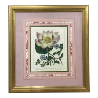 19th Century Antique English Water Lily Hand-Colored Engraving Print For Sale
