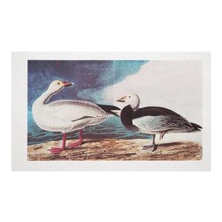 1960s Vintage John James Audubon Snow Goose Reproduction Lithograph Print For Sale