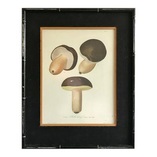 Antique Drawing Mushroom Print For Sale