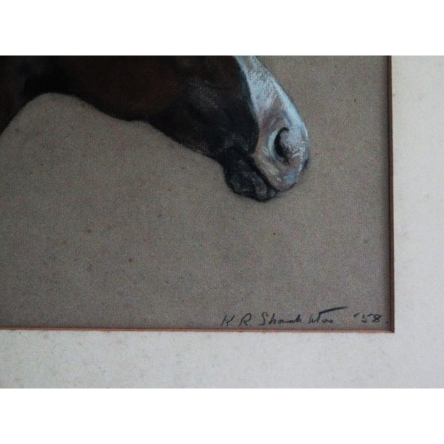 Equestrian Race Horse Portrait Drawing - Image 7 of 8