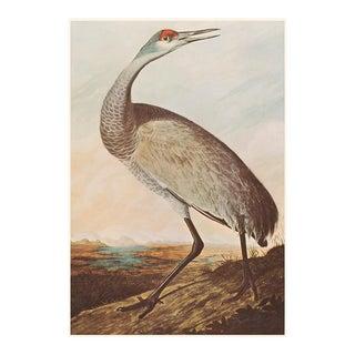 Sandhill Crane by John J. Audubon, Vintage American Classical Print For Sale