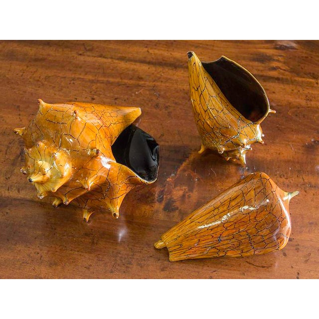 Exceptional Hand Blown Art Glass Conch Shell Silkwood: silkwood glass
