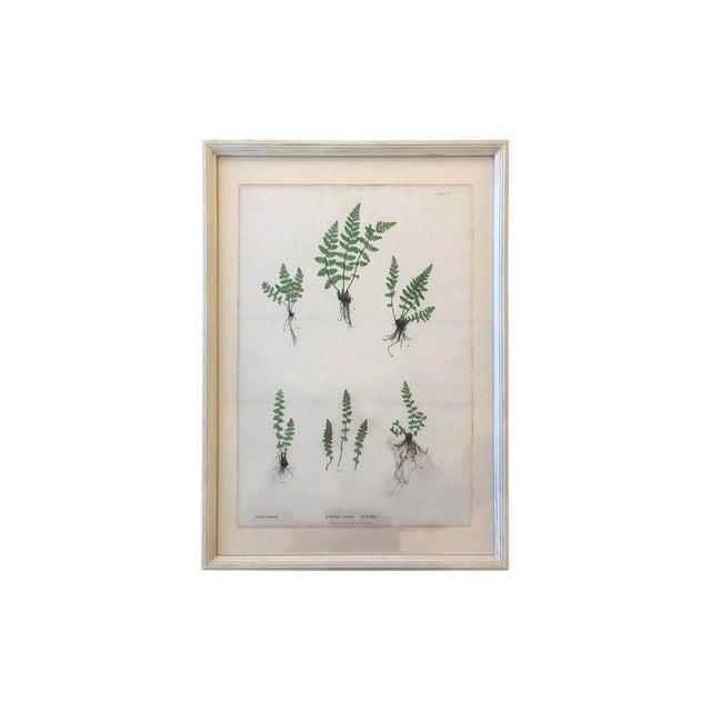 19th Century Bradbury & Evans Nature Printed Fern Print For Sale