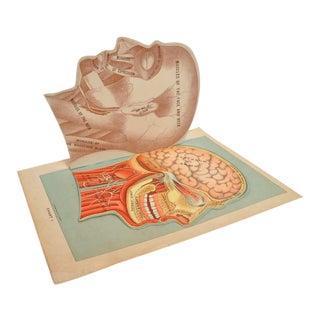 """1901 Vintage """"Mon Docteur"""" Anatomy Books - a Pair For Sale"""