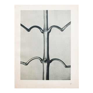 1930s Vintage Karl Blossfeldt Photogravure N17-18 For Sale