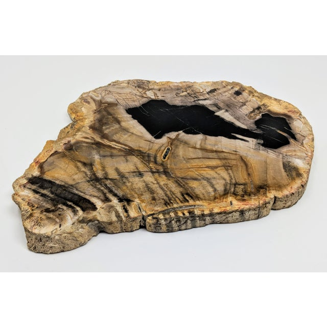 Polished Petrified Wood Tray For Sale - Image 13 of 13