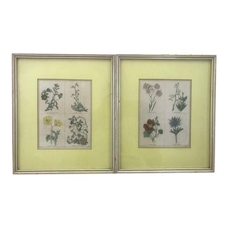 1830s Hand Painted Botanical Etchings Prints by Sidney Watts - Set of 2 For Sale