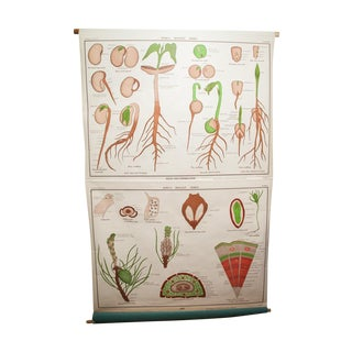 Jurica Biology Series Botanical Pulldown Chart