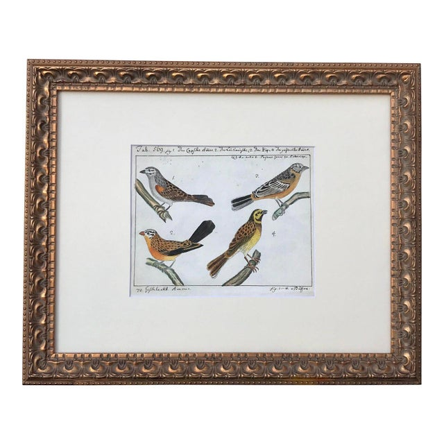 Watercolor Antique Original Watercolor Birds Ornithological Study 18th Century For Sale - Image 7 of 7