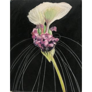Botanical Drawing by Marianne Stikas For Sale