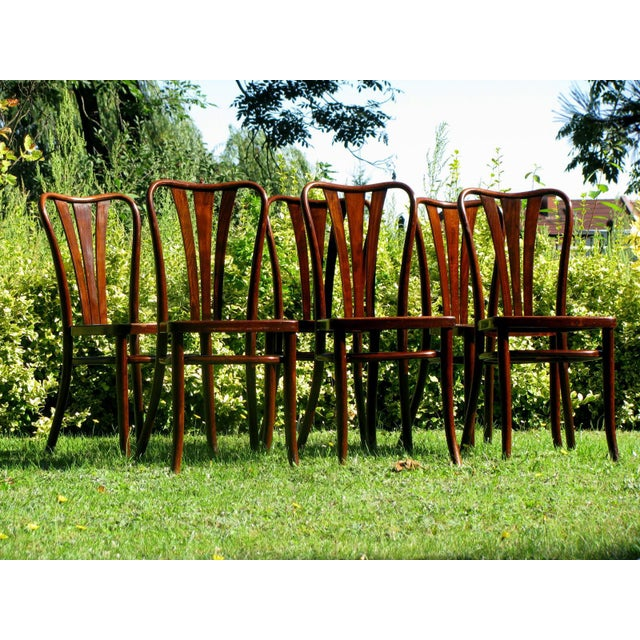1930s Vintage Dining Chairs by Thonet, 1930s - Set of 6 For Sale - Image 5 of 11