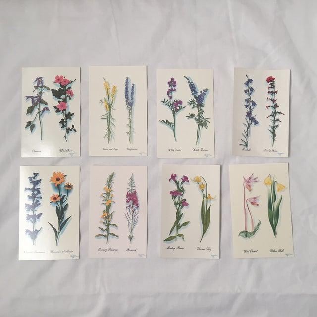 Illustration Harrison R. Crandall Wildflower Postcards - Set of 8 For Sale - Image 3 of 6