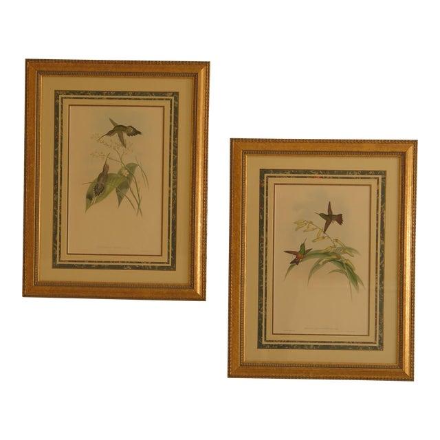 Original John Gould Matted & Gold Framed Colored Etchings - a Pair For Sale