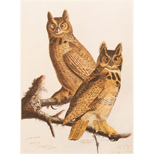 Lithograph 1960s Cottage Lithograph of Great Horned Owl by Audubon For Sale - Image 7 of 9