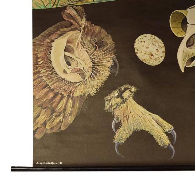German Educational Poster of Birds of Prey - Image 4 of 4