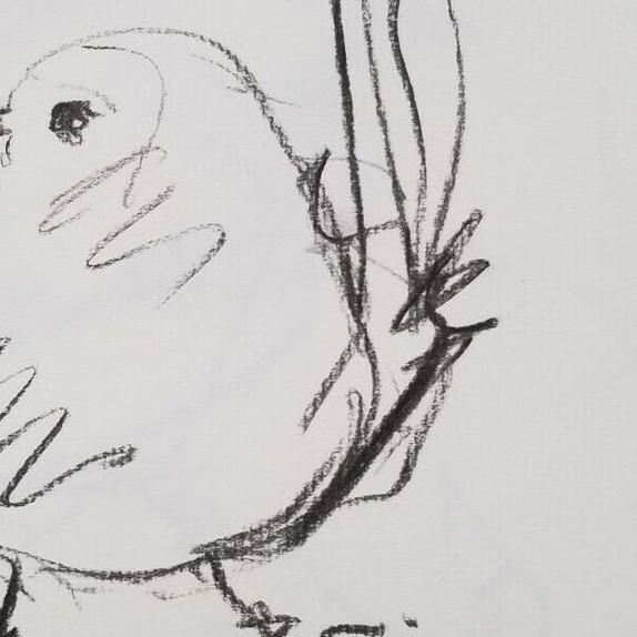 Contemporary Original Charcoal Paper Sketch Drawing of Bird by Jose Trujillo For Sale - Image 3 of 4