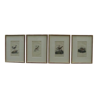 18th Century Hand-Colored Bird Engravings, Framed - Set of 4 For Sale