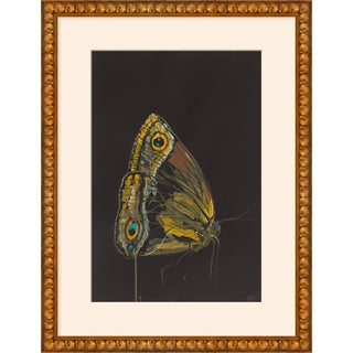 "Medium ""Moth Profile"" Print by Alex K. Mason, 20"" X 26"" For Sale"