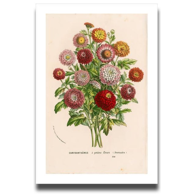 French Vintage Mums Archival Print For Sale - Image 3 of 5