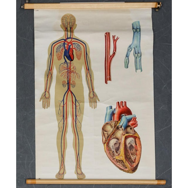 Vintage Circulatory and Respiratory Learning Poster - A Pair For Sale - Image 6 of 7