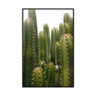 """San Pedro Cacti"" Original Framed Photograph For Sale"
