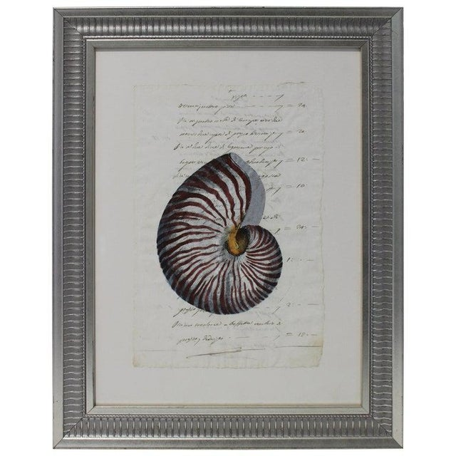 Hand Painted Nautilus Shell on Parchment For Sale - Image 10 of 10